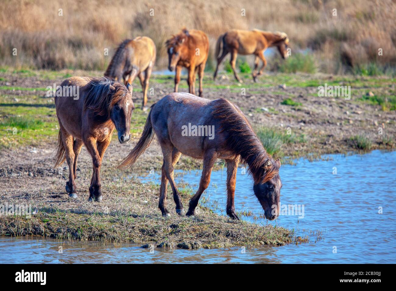 Scenery With Wild Horse Mustangs In The Wild Stock Photo Alamy