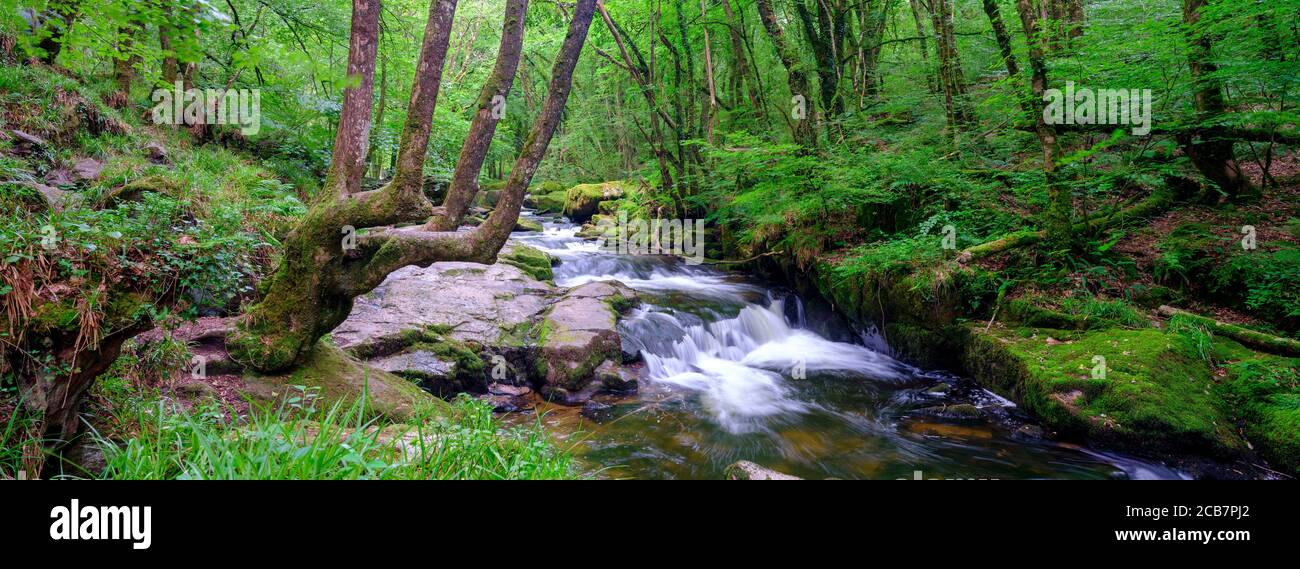Liskeard, UK - July 15, 2020:  Golitha Falls on the River Fowey on Bodmin Moor, Cornwall, UK Stock Photo