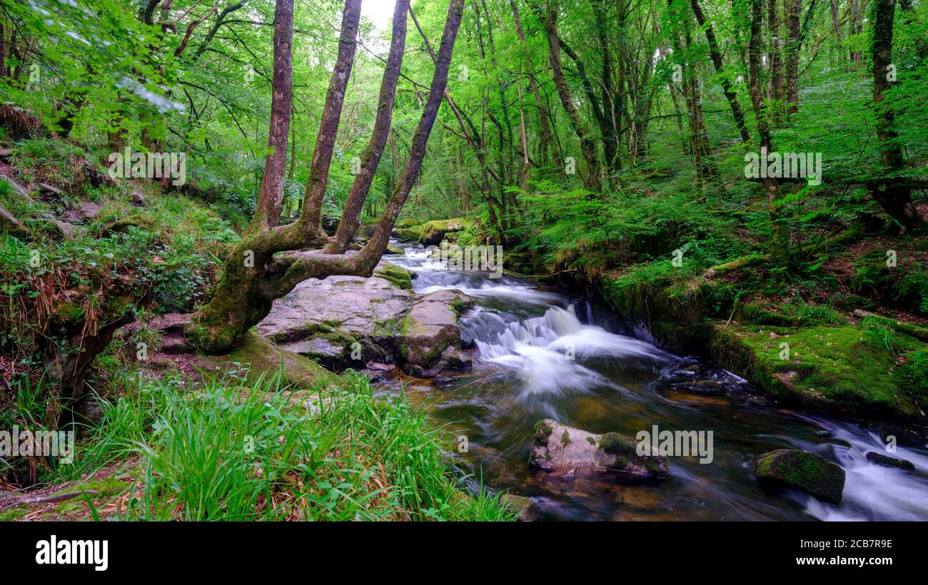 Liskeard, UK - July 15, 2020:  Golitha Falls on the River Fowey on Bodmin Moor, Cornwall, UK Stock Photo