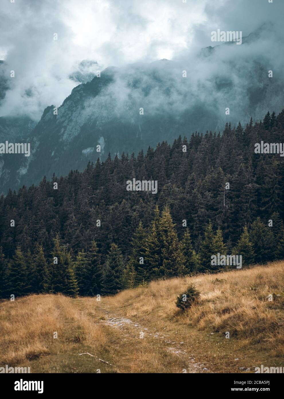Mountain Landscape With Trees And Clouds Mist During Day Background Wallpaper Stock Photo Alamy Clouds mountains trees grass spruce fog