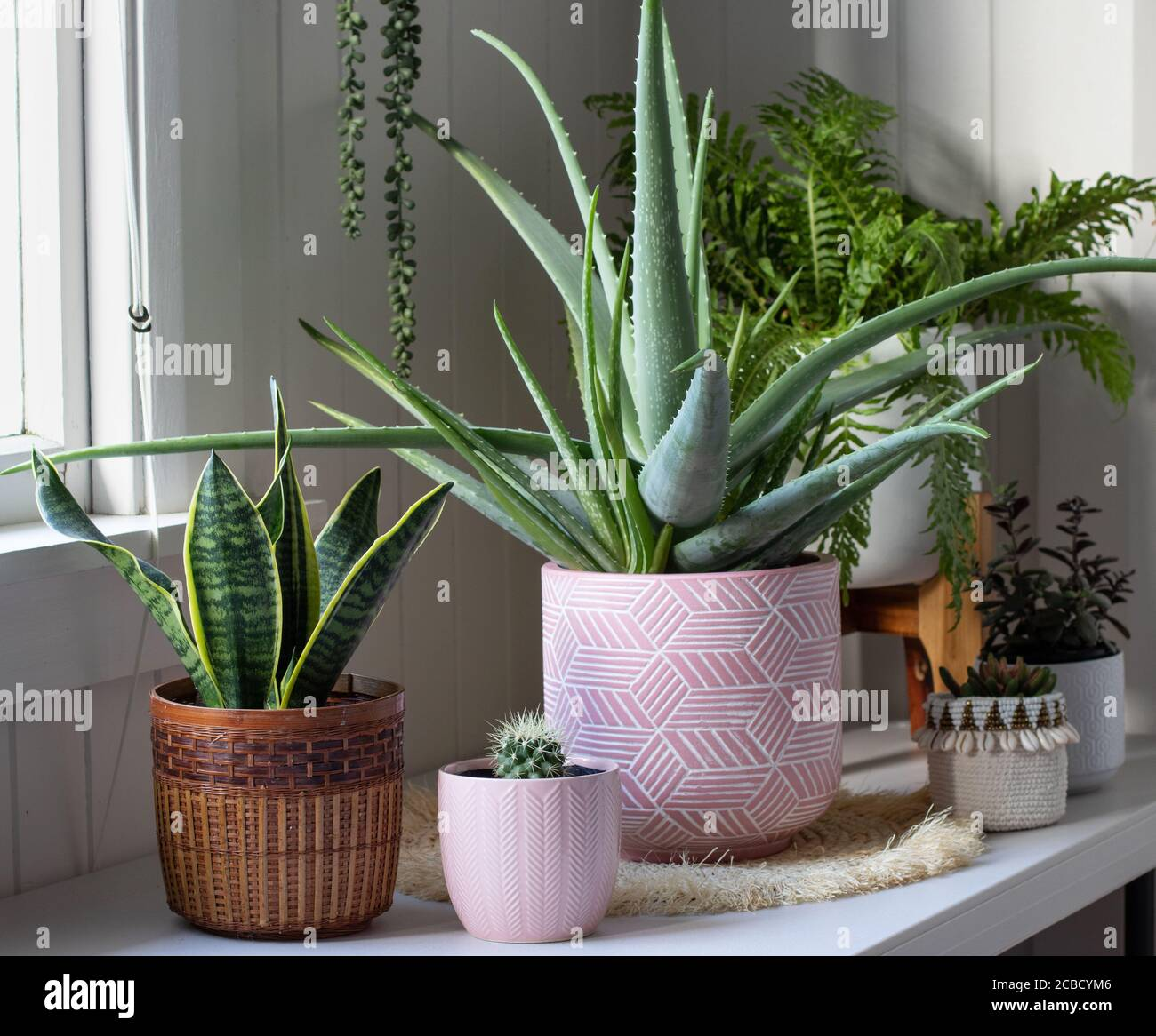 Aloe Vera Plant Room High Resolution Stock Photography And Images Alamy