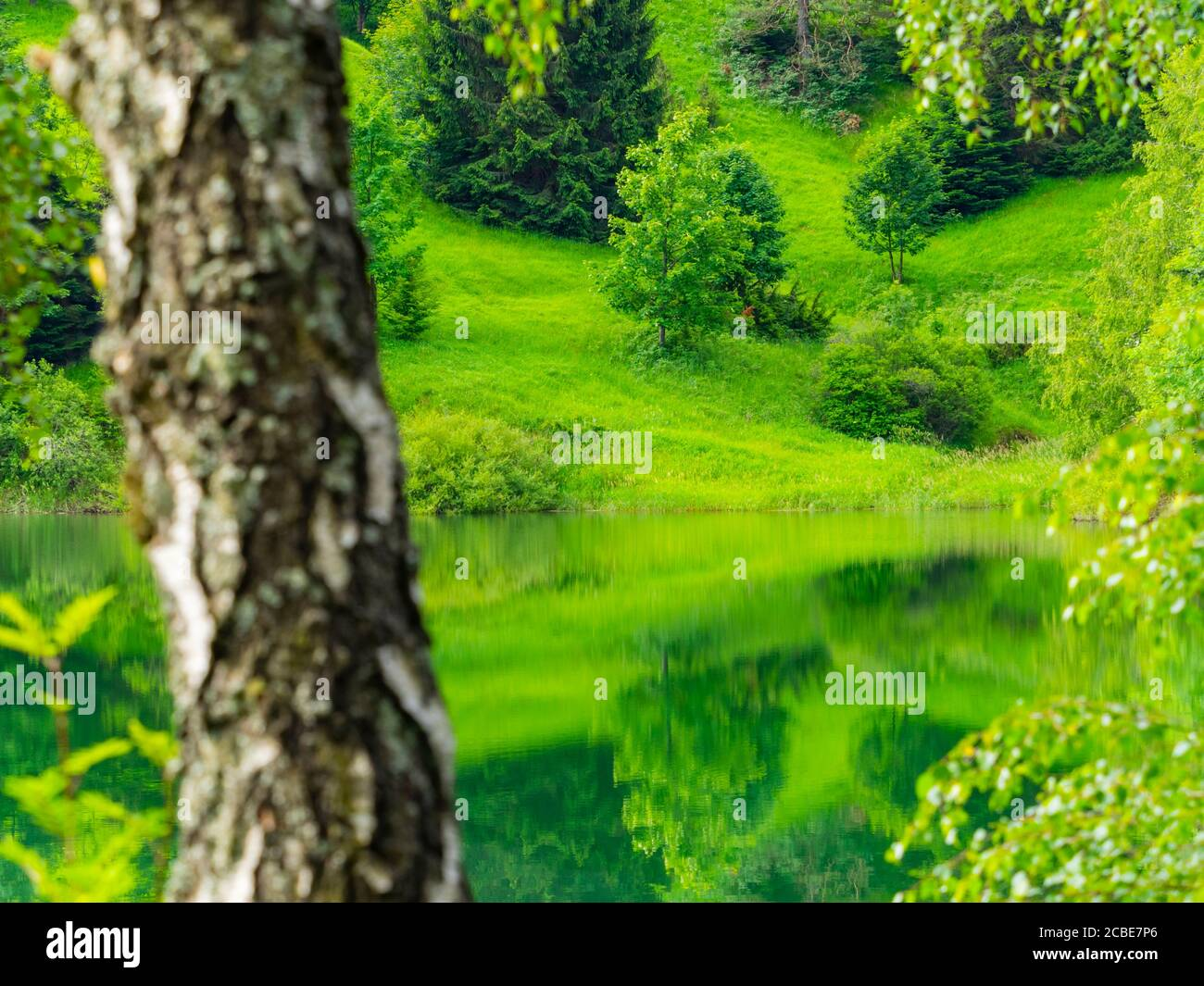 Defocused tree trunk Green forest pretty beautiful preserved nature natural environment Spring season in lake Mrzla vodica in Croatia Europe Stock Photo