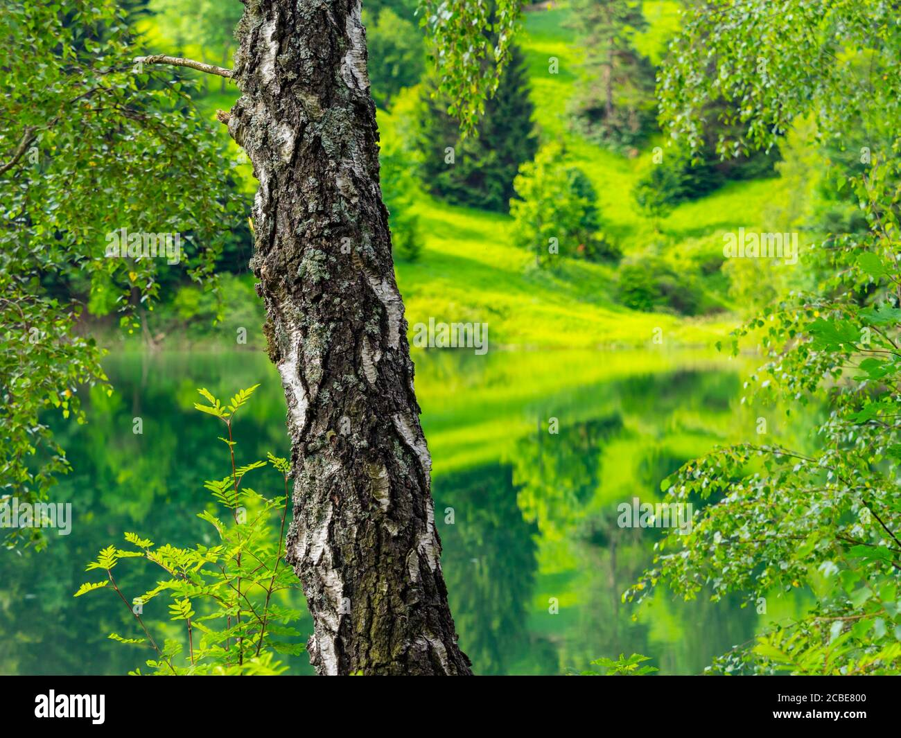 Green forest pretty beautiful preserved nature natural environment Spring season in lake Mrzla vodica in Croatia Europe Stock Photo