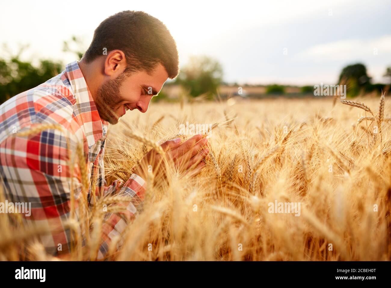 Smiling farmer holding and smelling a bunch of ripe cultivated wheat ears in hands. Agronomist examining cereal crop before harvesting on sunrise Stock Photo
