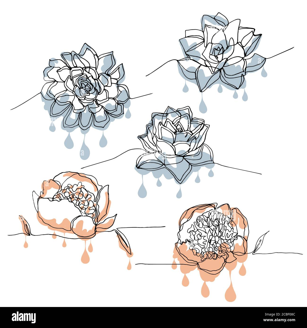 Hand Drawn One Line Drawing Succulent Clipart Floral Design Element Isolated On White Background Vector Stock Vector Image Art Alamy
