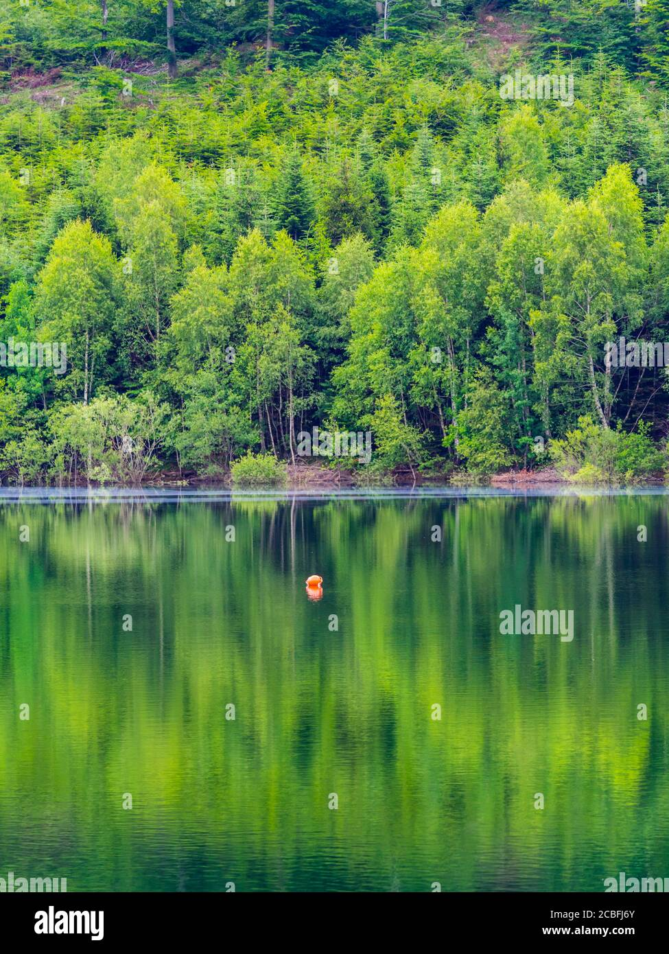 Green forest pretty beautiful preserved nature natural environment Spring season lake Lepenica near Fuzine in Croatia Europe Stock Photo