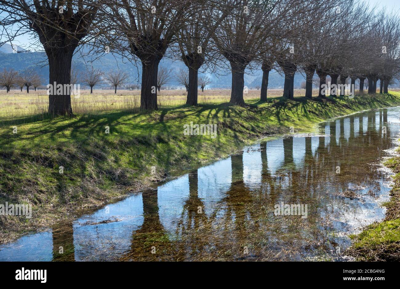 Mulberry trees reflected in an irrigation channel   on the flood plains of Mantineia, near Tripoli, Southern Arcadia, Peloponnese, Greece, Mulberry tr Stock Photo