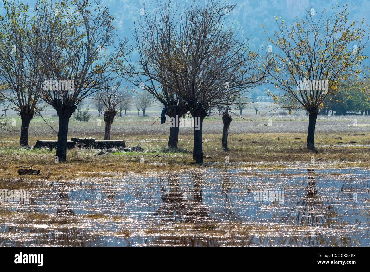 Flooded, Autumn, landscape with old water well and mulberry trees on the flood plains of Mantineia, near Tripoli, Southern Arcadia, Peloponnese, Greec Stock Photo
