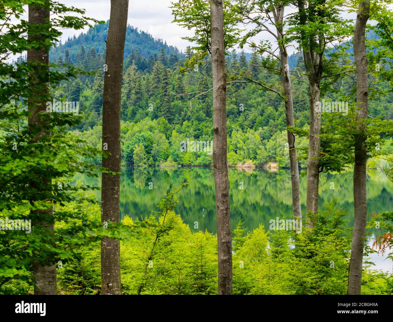 Green forest pretty beautiful preserved nature natural environment Spring season lake Lepenica near Fuzine in Croatia Europe Stock Photo