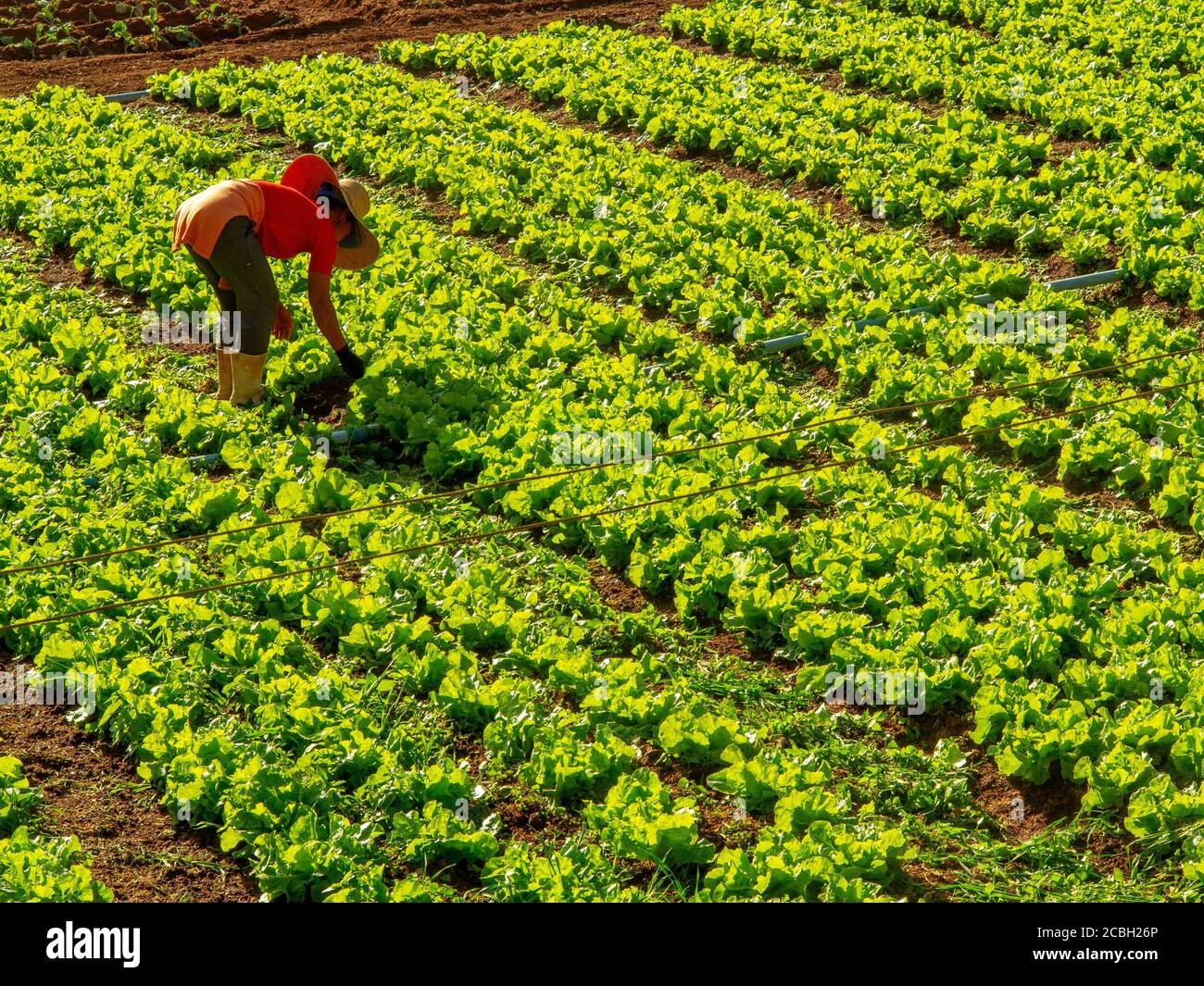 Brazilian Farm High Resolution Stock Photography And Images Alamy