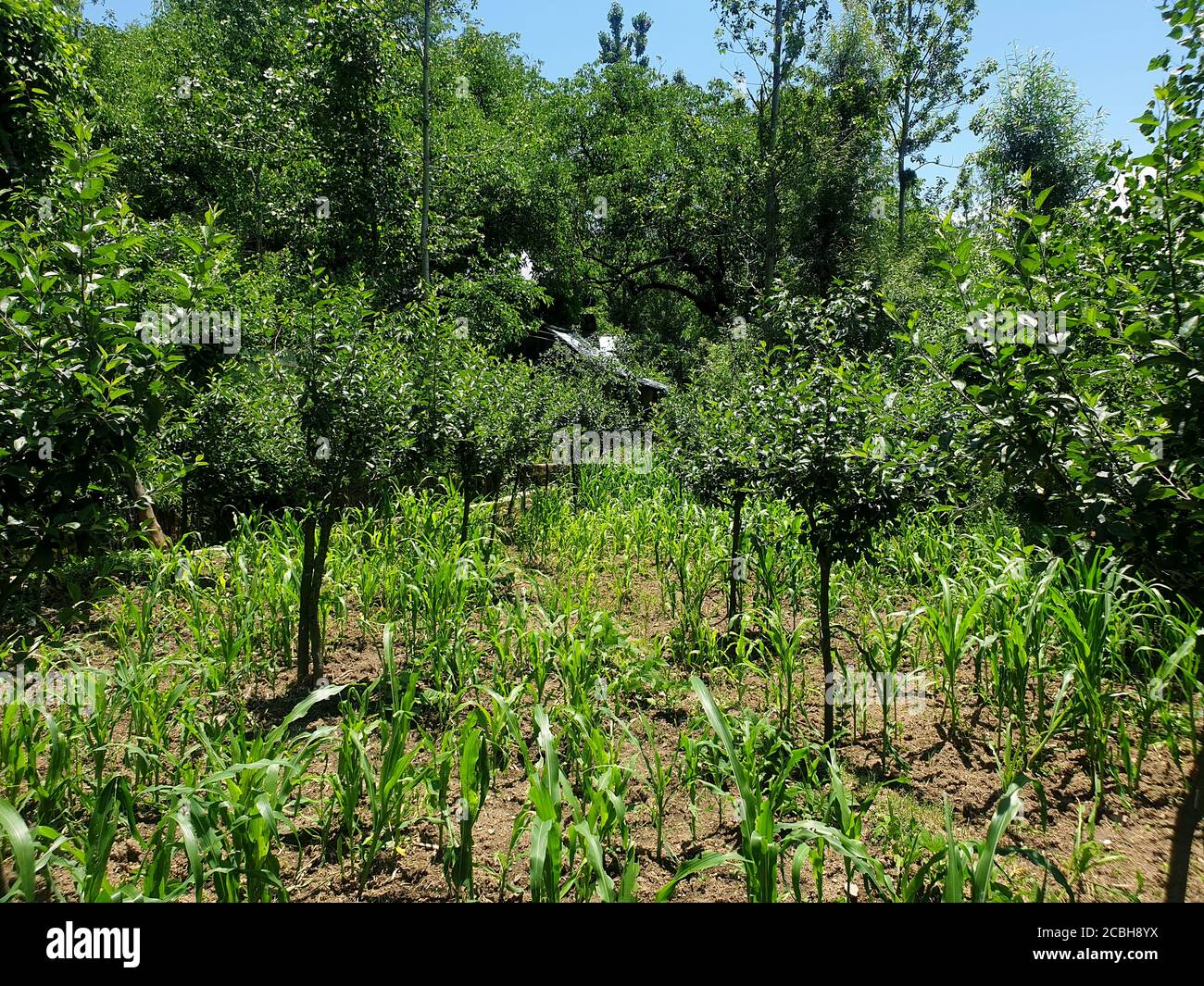 Spring Buds Flowers New Fruits Tree Branches Greenery And Green Beauty Of Nature Small Trees Are Growing In New Spring The Beautiful Scenery Of Natu Stock Photo Alamy