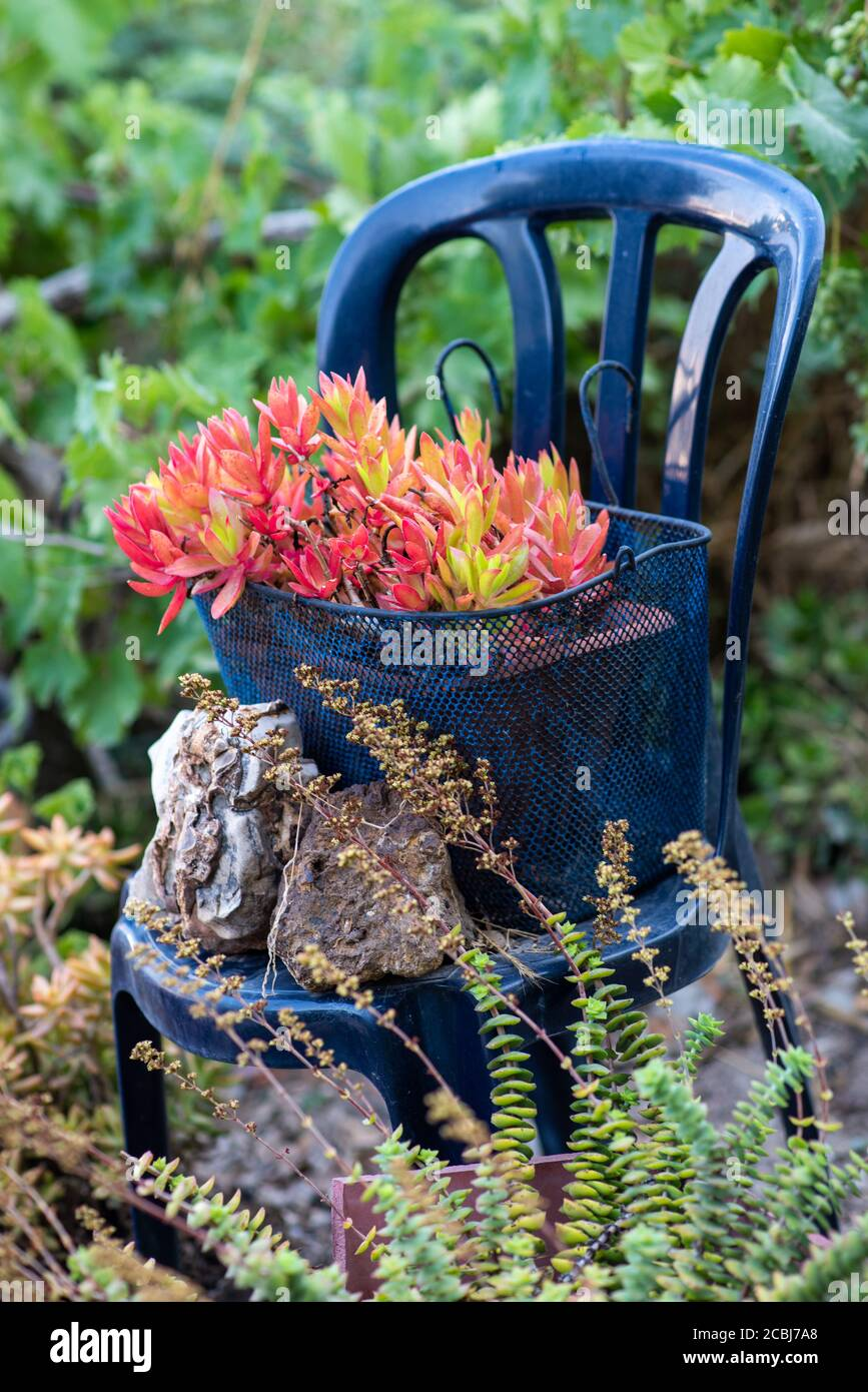 Upcycling Chair As Planter High Resolution Stock Photography And Images Alamy