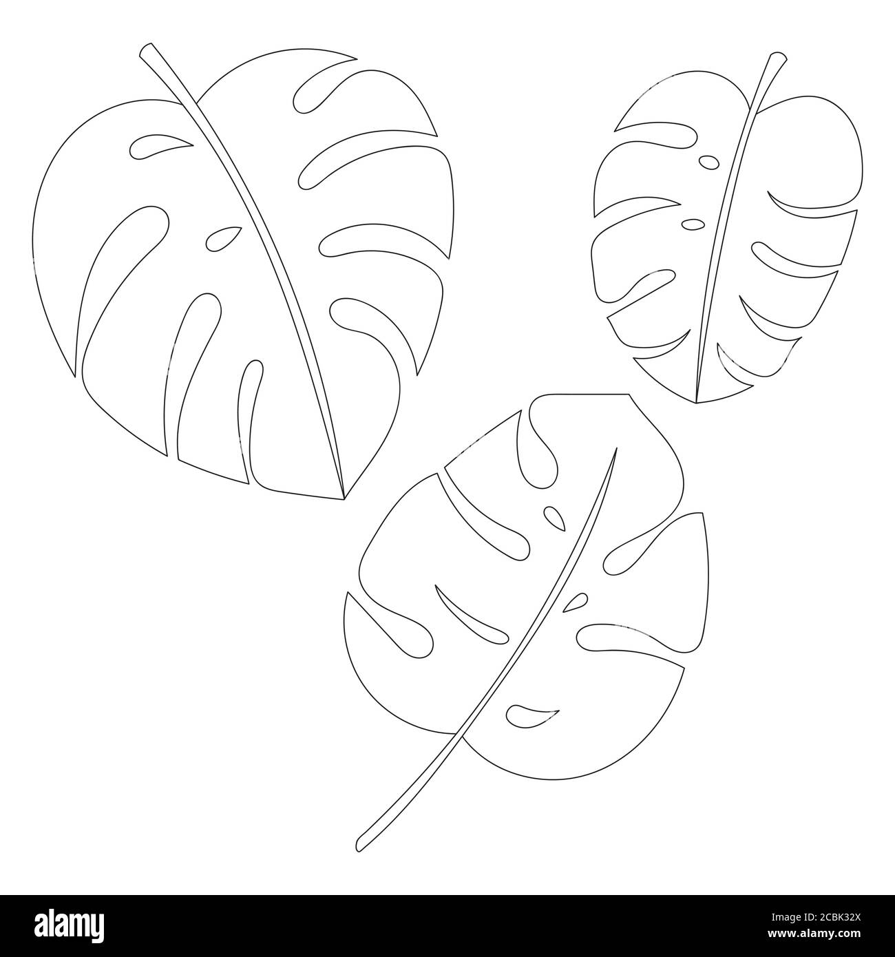 Monstera Leaf Outline High Resolution Stock Photography And Images Alamy All the best tropical leaves drawing 38+ collected on this page. https www alamy com vector jungle leaves set tropical exotic plant leaf isolated on white background monstera botanical floral illustration outline drawings image368598466 html
