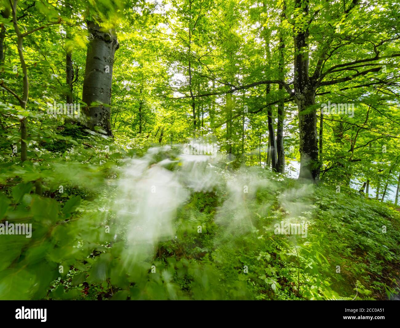 Green forest blurry blur patch of light sunlight through dense Green vegetation trees woodland in country-side countryside without people wop nobody Stock Photo