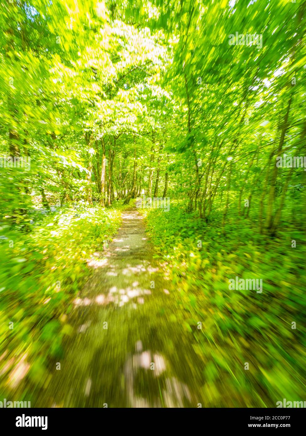 Pathway trail through Green forest nature Spring season Zeleni vir near Skrad Croatia Europe Stock Photo