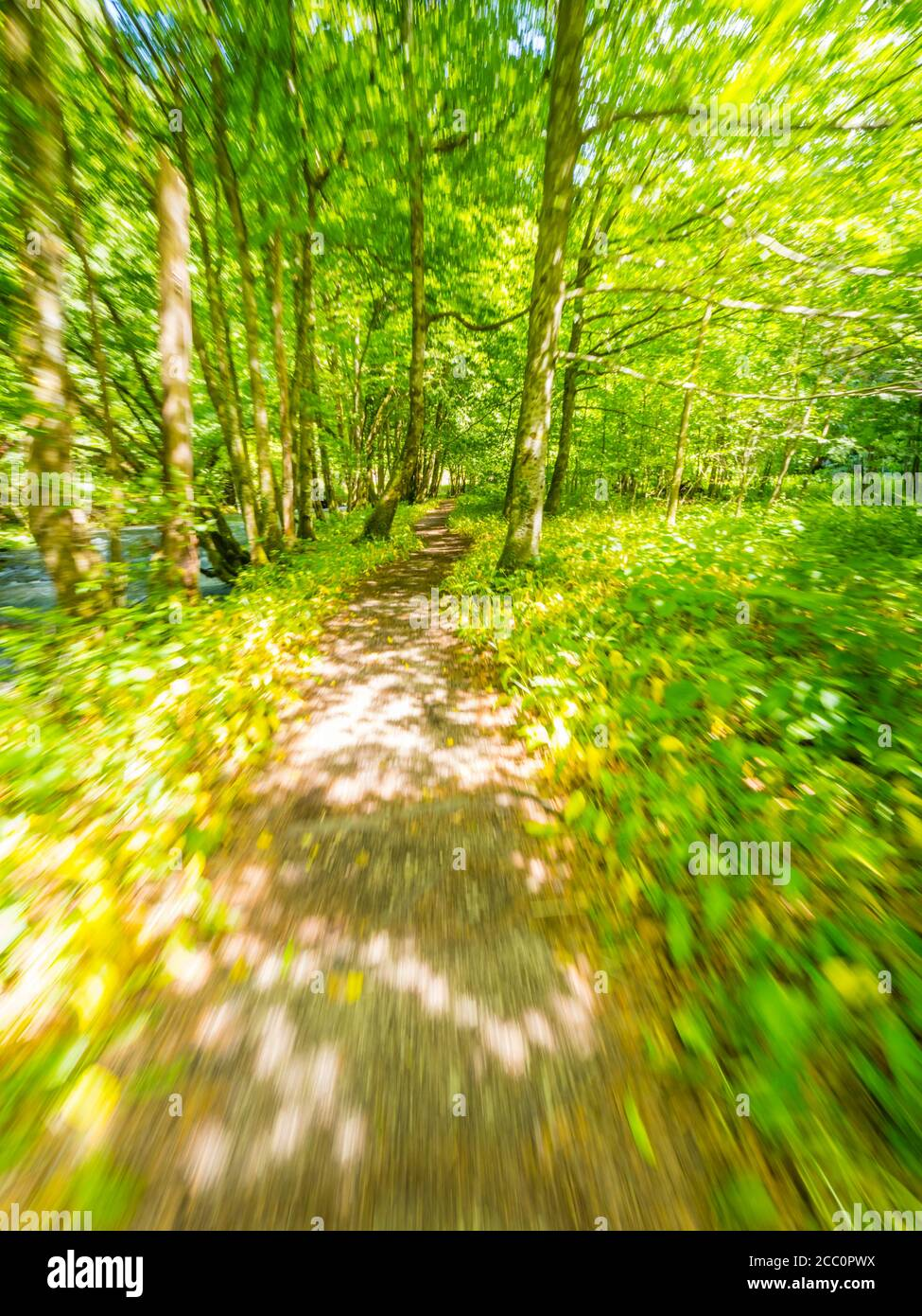 Pathway trail through Green forest nature Spring season Zeleni vir near Skrad Croatia Europe Stock Photo
