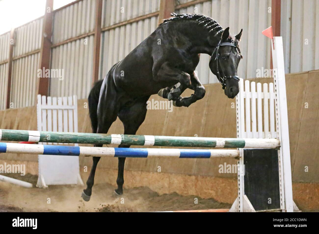 Beautiful Young Purebred Horse Jump Over Barrier Free Jumping In The Riding Hall Young Beautiful Sport Horse Free Jumps Over A Hurdle Indoors Stock Photo Alamy
