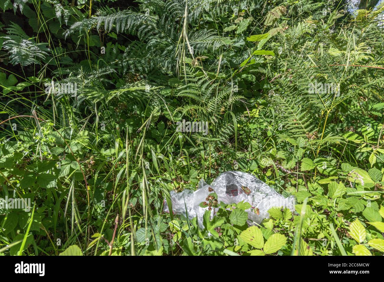 Transparent wrap plastic sheet discarded in rural hedgerow. Metaphor plastic pollution, environmental pollution, war on plastic waste, plastic rubbish Stock Photo