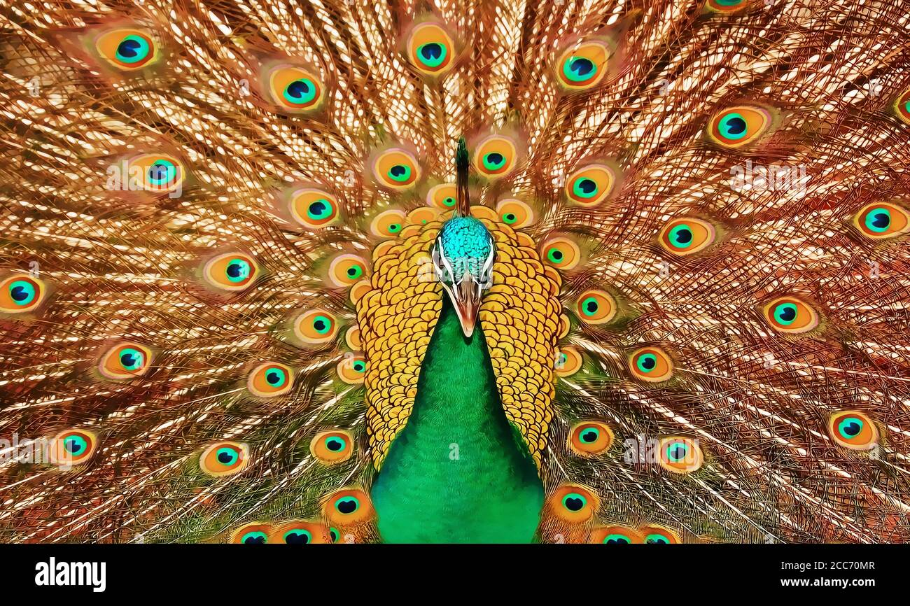 3d Peacock Wallpaper High Resolution Stock Photography And Images Alamy