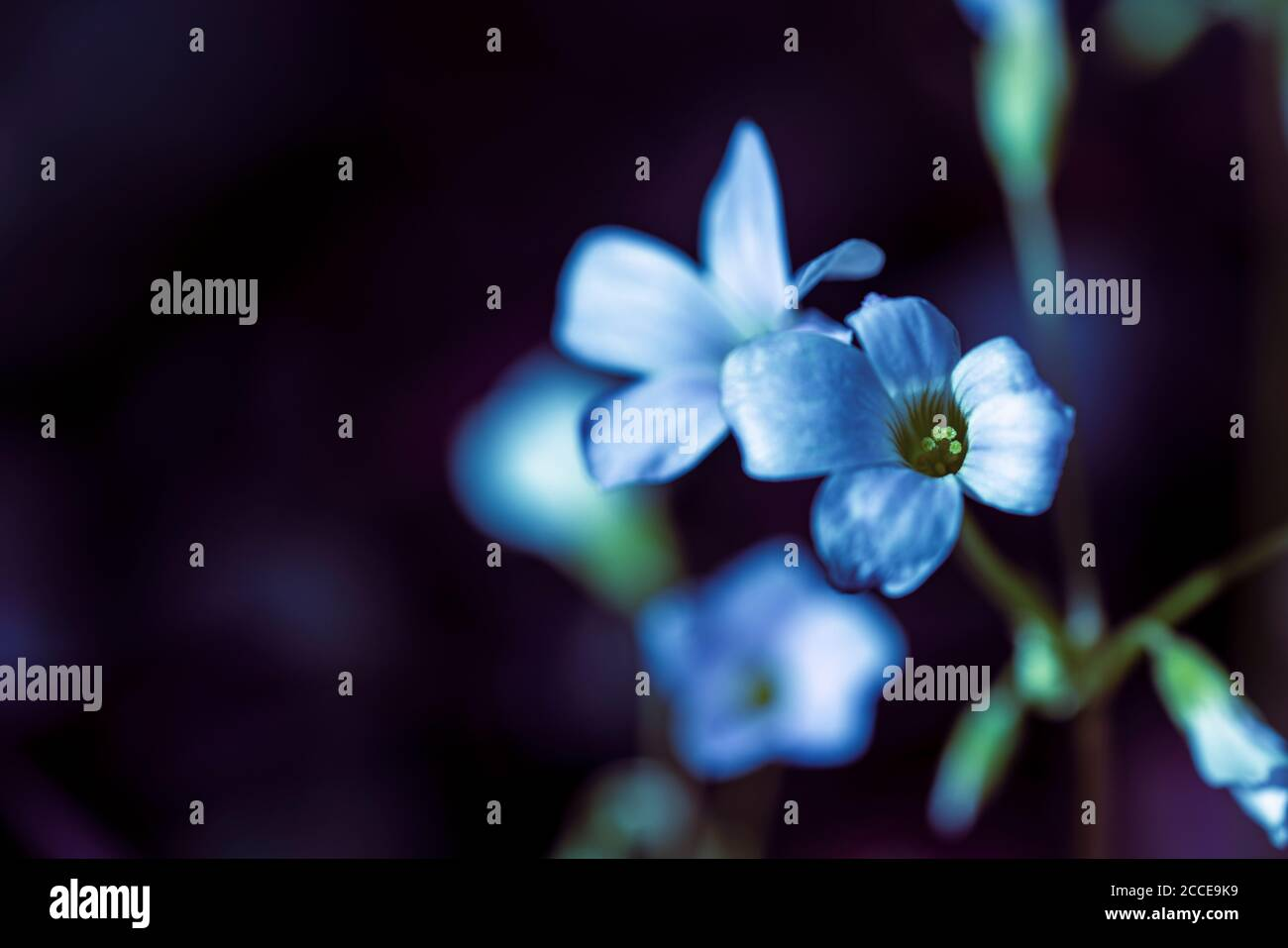 Close Up, Nature, Garden, Flower, Growth, Abstract, Stock Photo