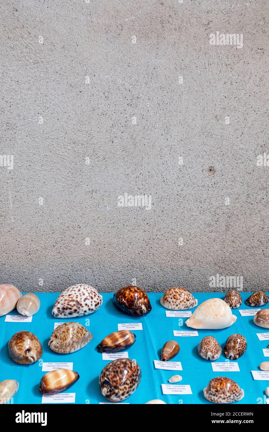 Different shells with names are displayed in front of a plastered wall Stock Photo