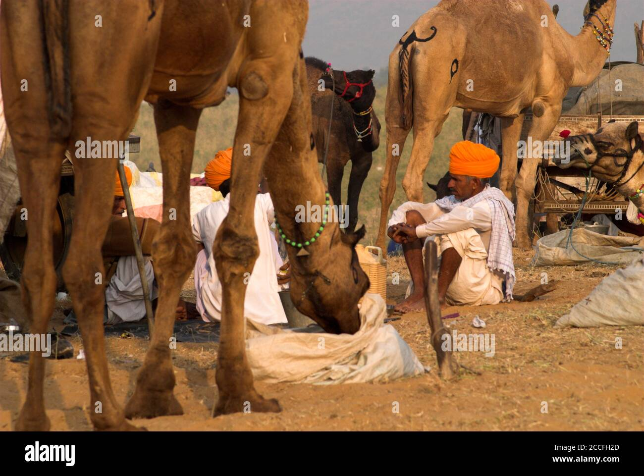 Campground scene at the camel fair in Pushkar, Rajasthan, India Stock Photo