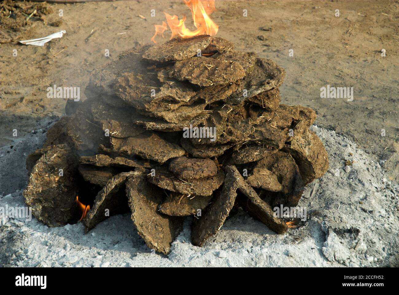 """Hand-moulded """"dung cakes"""" are traditionally used as fuel in India for cooking food, as seen here at the Pushkar Camel Fair in Rajasthan Stock Photo"""