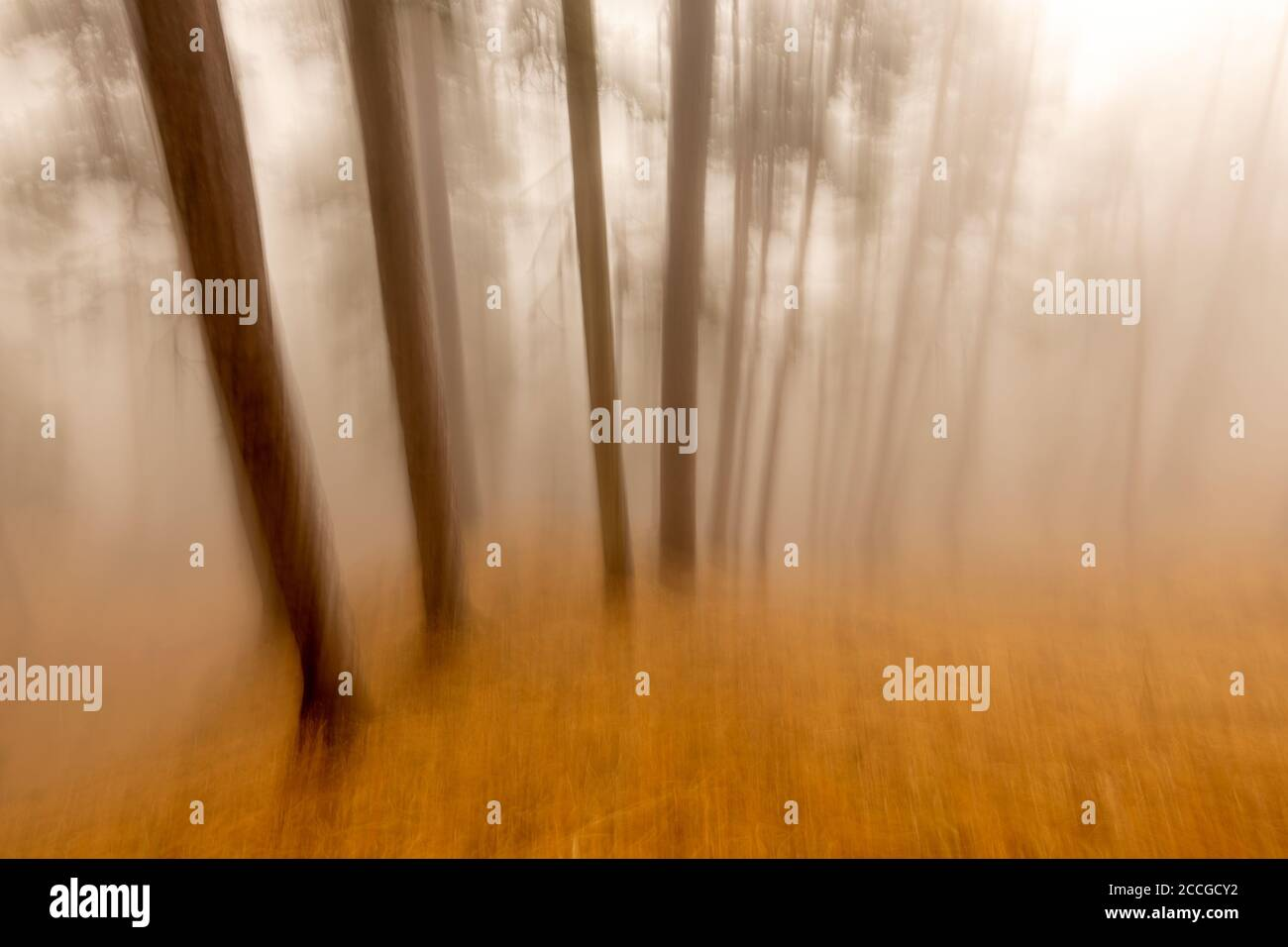 Wiper shot or deliberately moving camera with pine trees in the fog at the Herzogstand. One of Munich's local mountains in the Ester Mountains, the Ba Stock Photo
