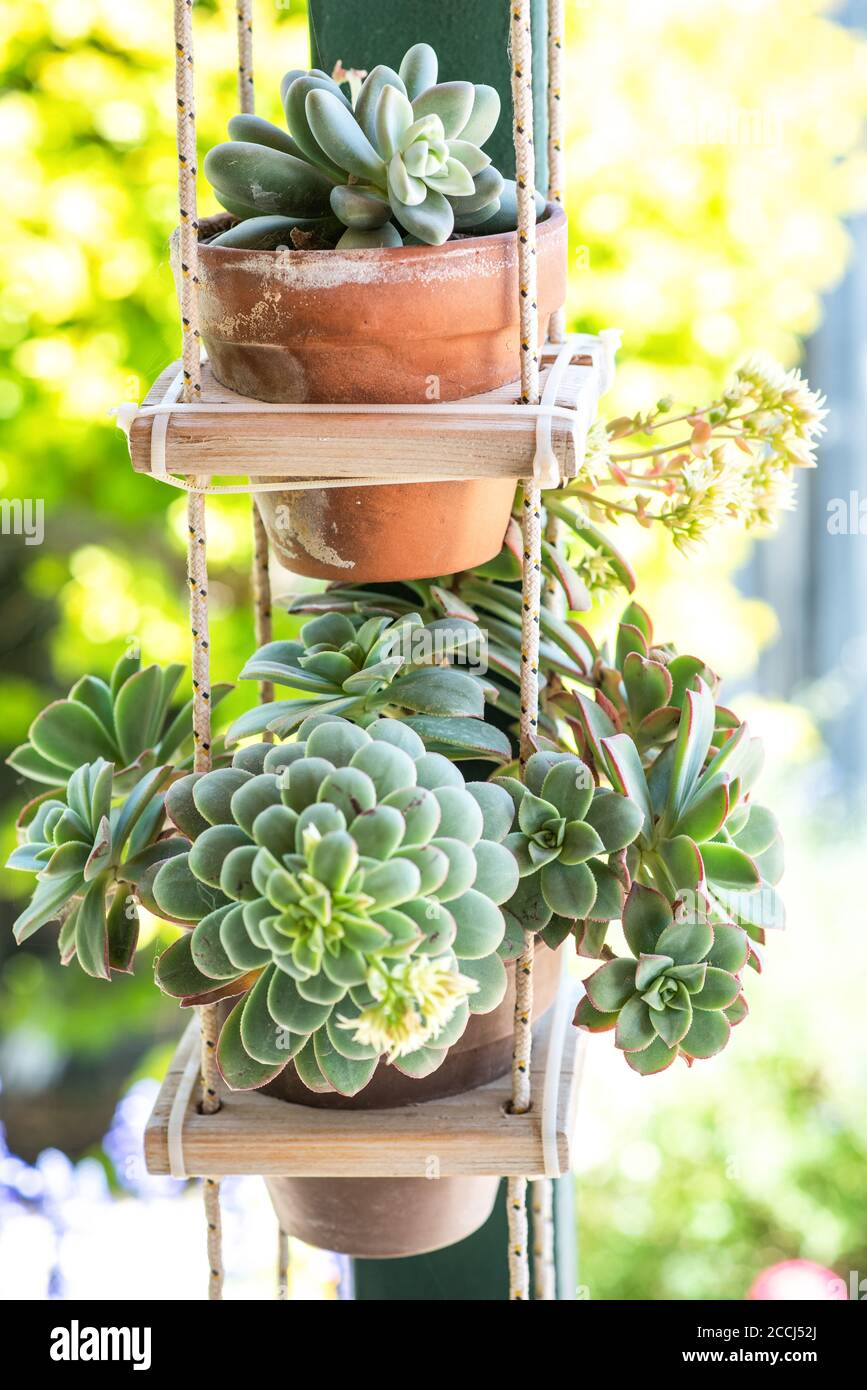 Diy Recycled Wooden Pallet For Flower Pots Succulent Plants In Flower Pots In Sunny Garden Stock Photo Alamy