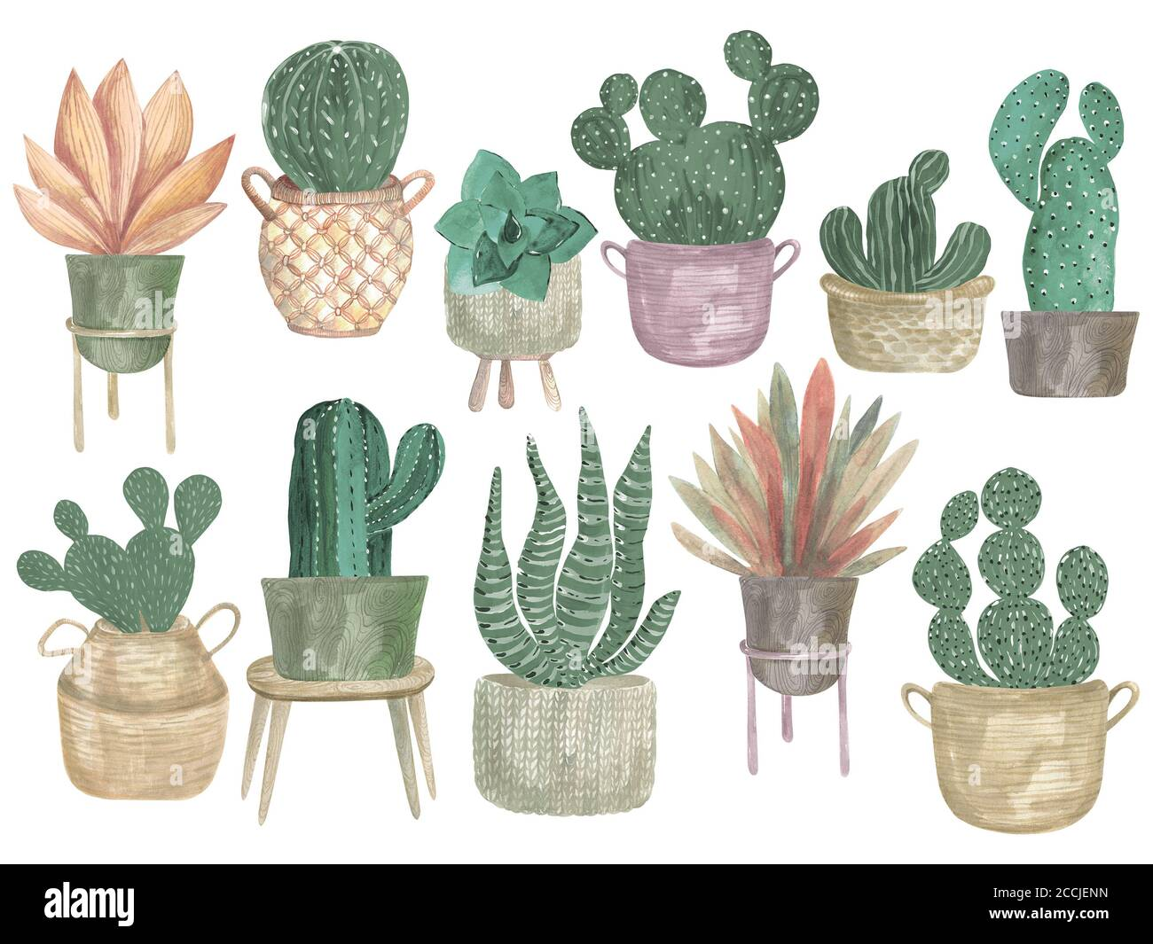 Watercolor Illustration Of A Collection Of Cacti In Pots Boho Decor Modern Indoor Plants Stock Photo Alamy