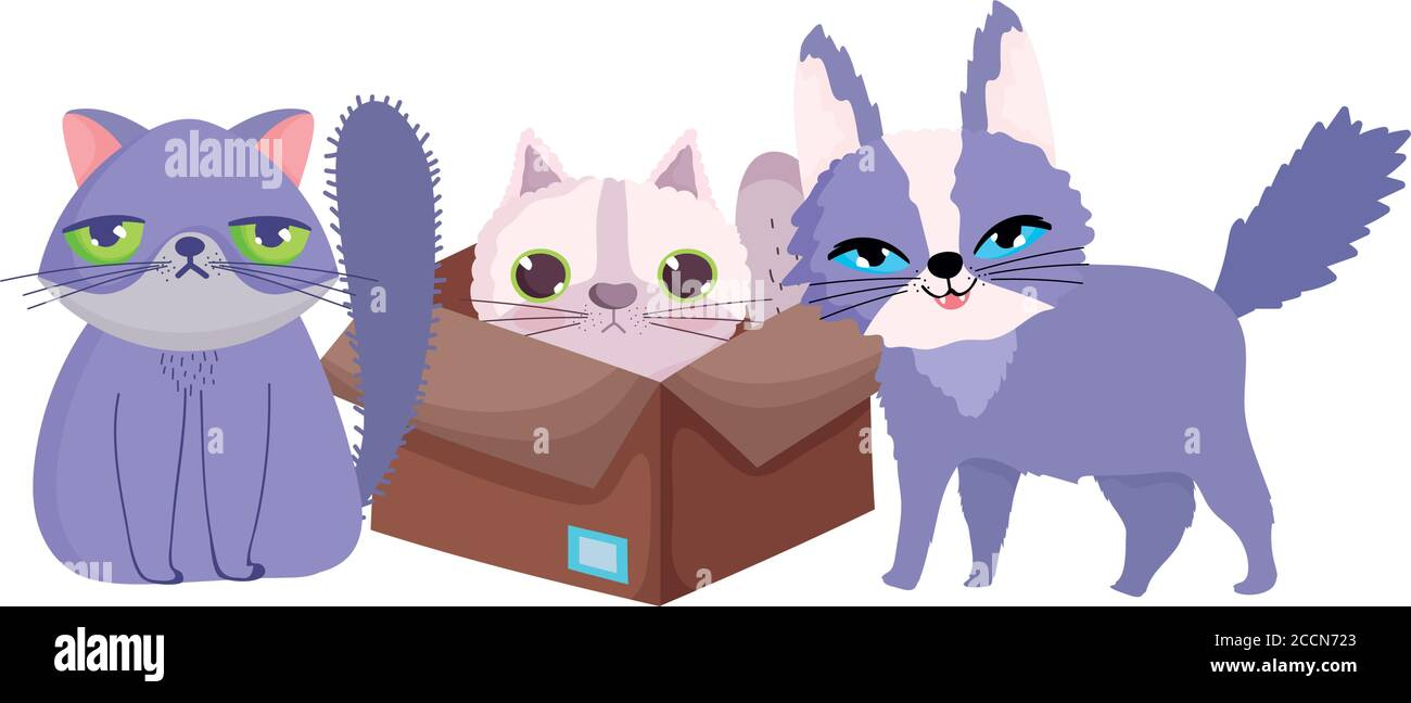 Pet Shop Ugly And Fluffy Cats In Box Animal Domestic Cartoon Vector Illustration Stock Vector Image Art Alamy