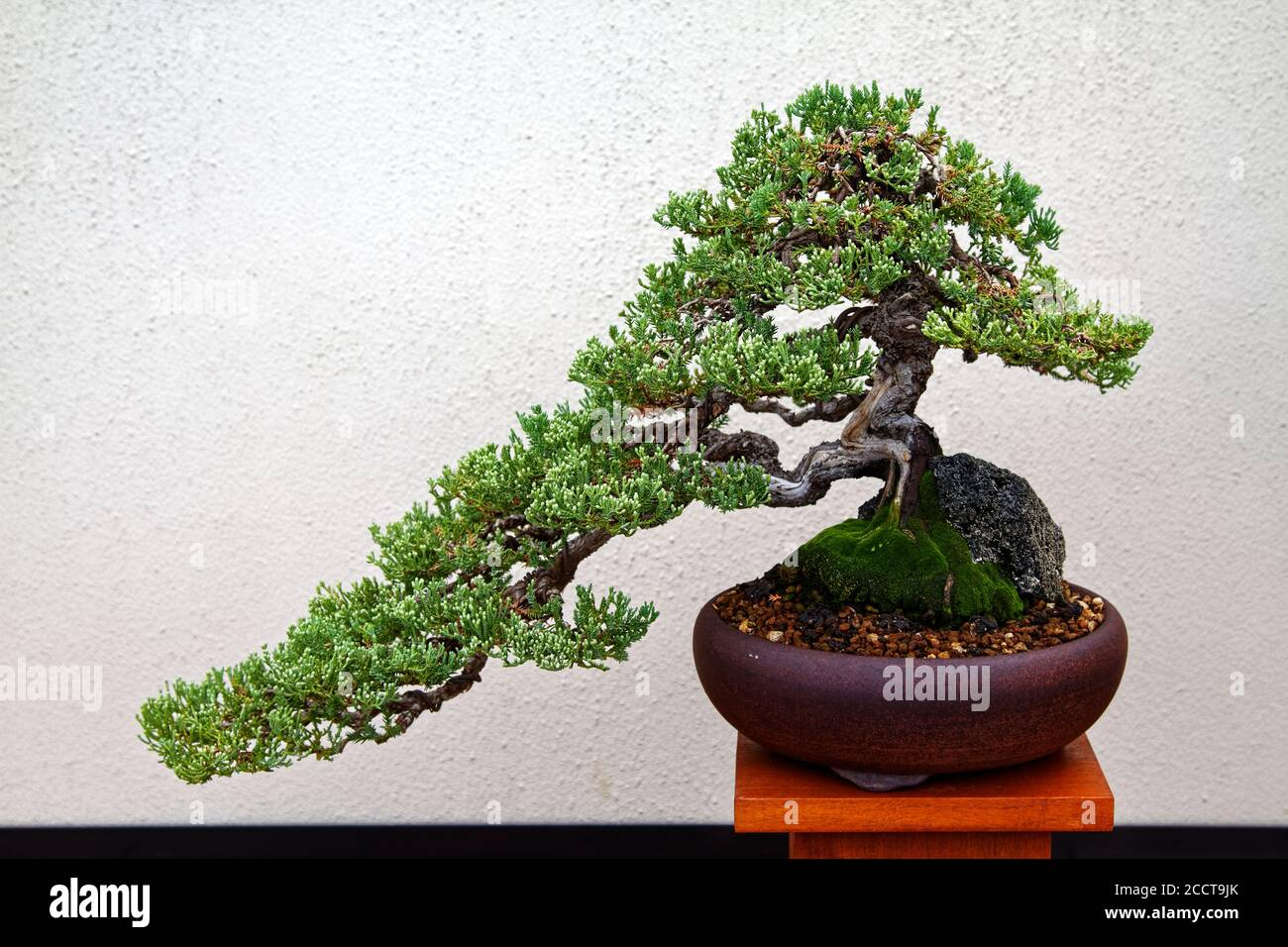 Bonsai Wire High Resolution Stock Photography And Images Alamy