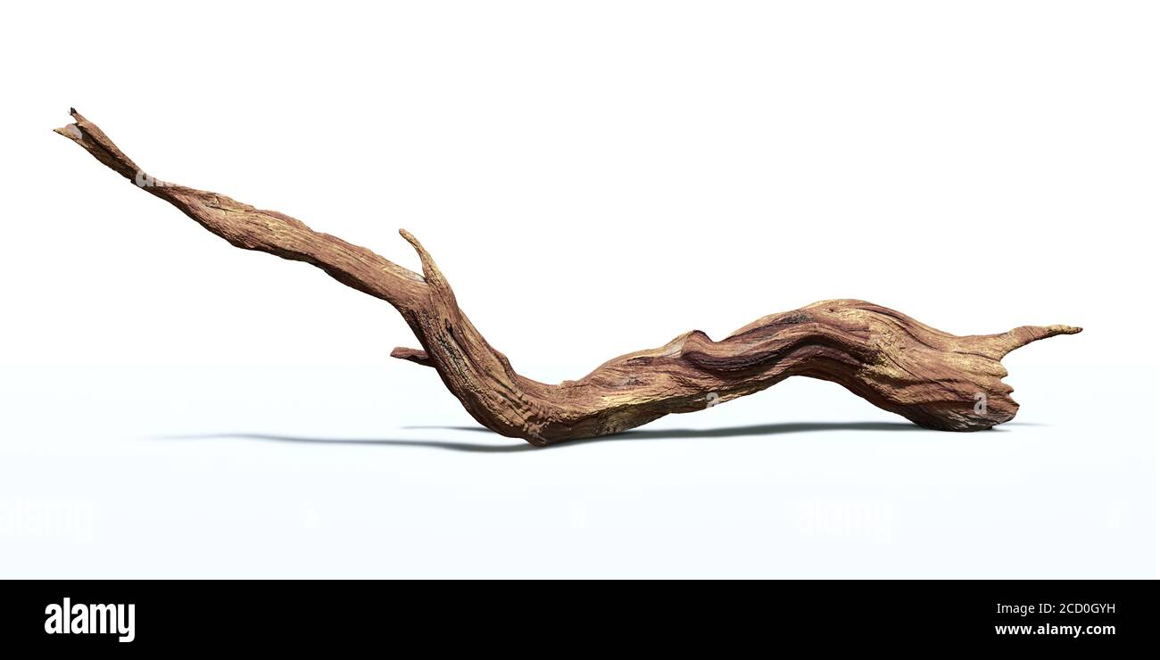 Driftwood Isolated On White Background Twisted Branch Stock Photo Alamy