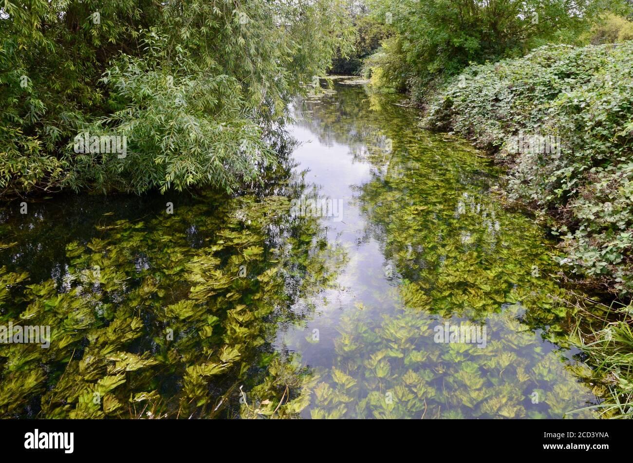 walthamstow wetlands reservoirs N17 ferry lane london england UK Stock Photo