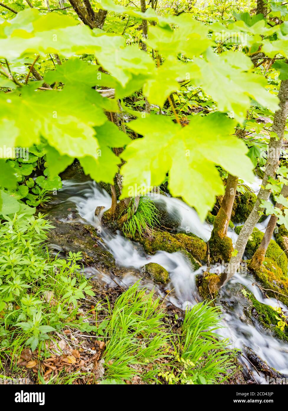 National park Plitvice lakes in Croatia Europe water flowing waterflow small river meandering under canopy of leaves trees Stock Photo