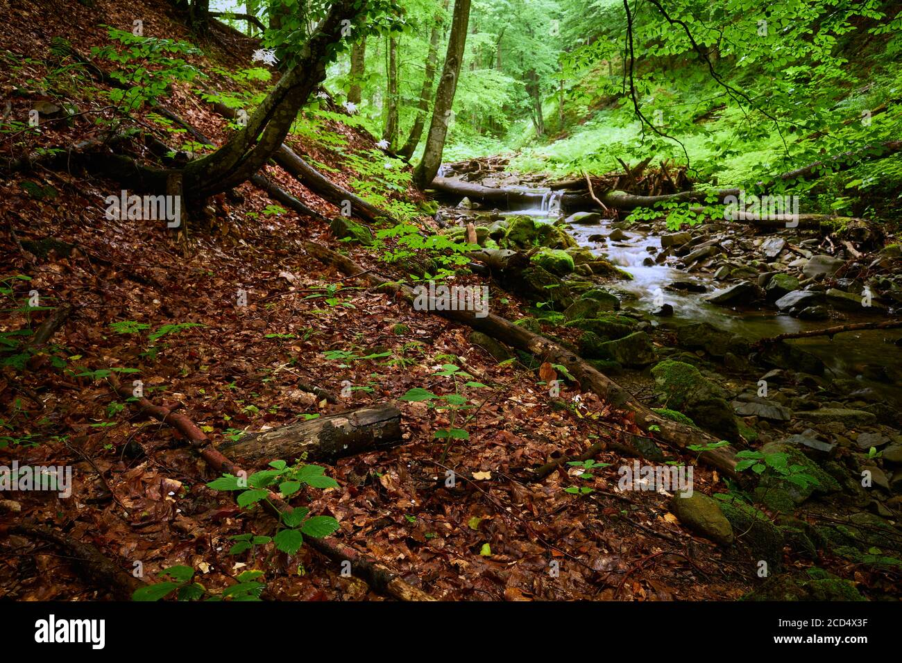 Wooded mountain stream bank. A mountain stream in the forest runs among the sloping banks strewn with fallen leaves. Stock Photo