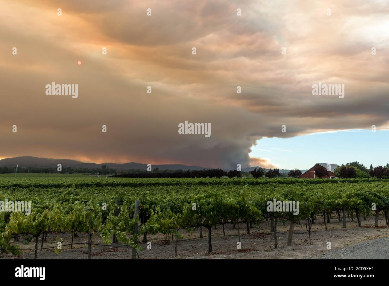 Wine Country Conflagration - Wide view of smoke emanating from the Walbridge Fire behind one of many vineyards in the area. Santa Rosa, CA, USA Stock Photo