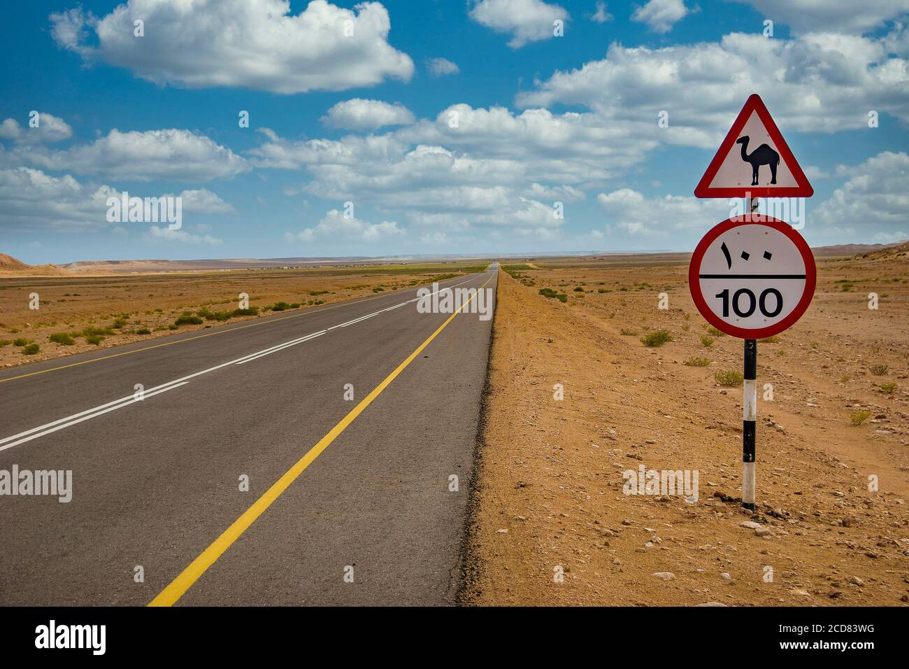 Camel road sign and speed limit road sign along a desert road in Oman Stock Photo