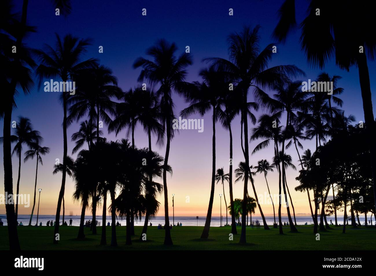 Spectacular and colorful sunset, silhouetted palm trees, on beach in resort neighborhood of Waikiki Beach, Oahu Island, Honolulu, Hawaii, USA Stock Photo