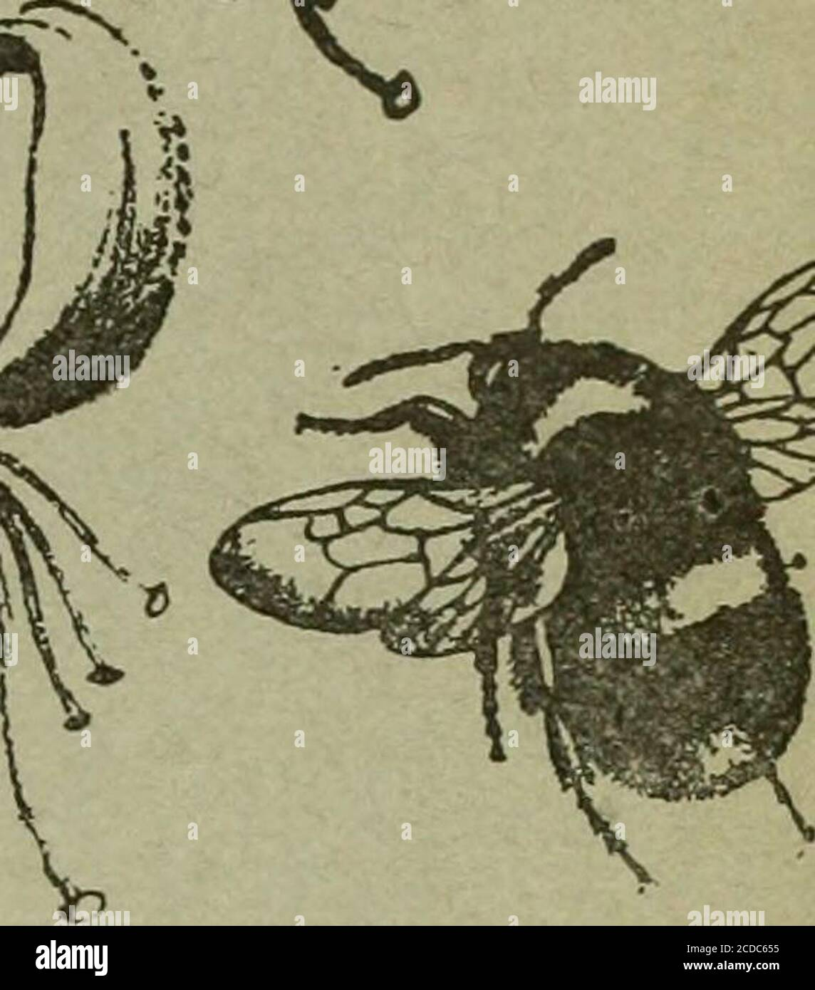 . The Entomologist's record and journal of variation . THE ENTOMOLOGISTS RECOP AND JOURNAL OF VARIATIO; Edited by J. W. TUTT, F.E.S. Assisted by T HUDSON BEARE, b.sc, f.e.s., i.h.s.e. dvn^n-p T BETHUNE-BAKER, r.z.s. f.l.s., f.e.s. BURR B°tc!Fz:s:F.i.t:.F.K.s. (rev.) b. r. n. burrows, F • JasE COLLIN, F.E.S. T. A. CHAPMAN h.d., ^??^^?^^?^?^H St J K DONIBTHORPE, F.z.s.. f.e.s. Alfred SIOH, F.eGeorge WHEELER, m.a., f.e.s. OCTOBEB Idih, 1909. Stock Photo