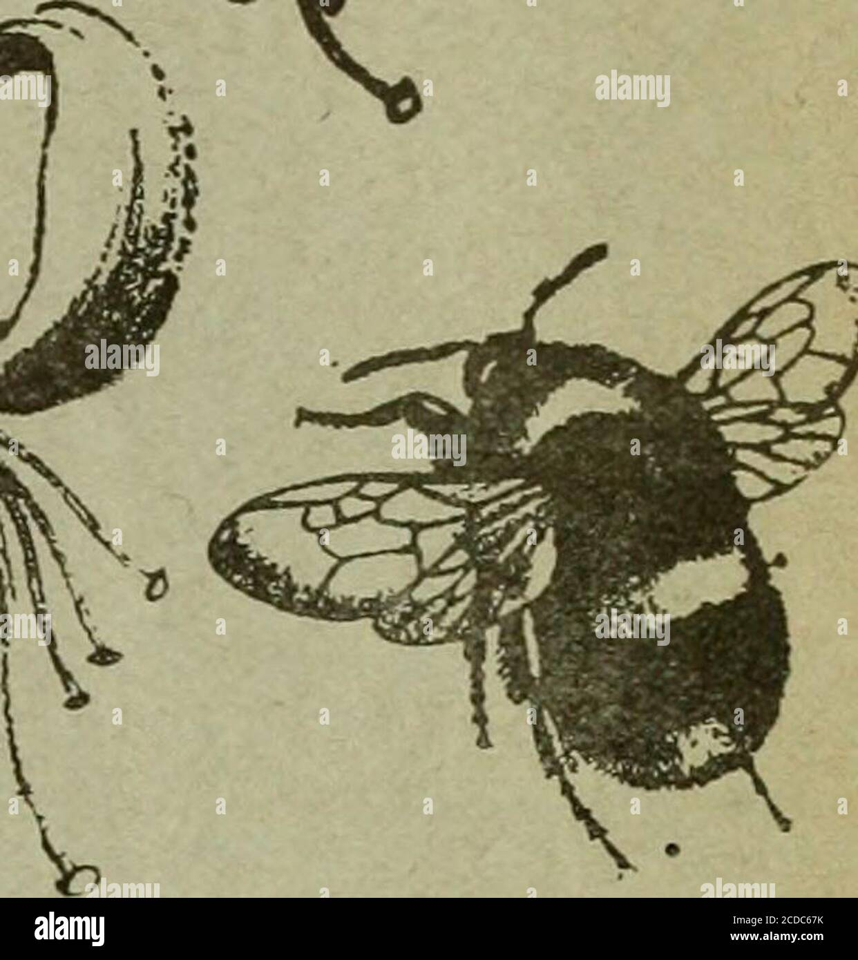 . The Entomologist's record and journal of variation . THE ENTOMOLOGISTS RECORI AND JOURNAL OF VARIATION Edited by J. Ml. TUTT, F.E.S. Assisted by T. HUDSON BEARE, b.sc, f.e.s., f.r.s.e. George T. BETHUNE-BAKER, r.z.s. f.l.s., f.e.s. M. BURR, B.A.,F.z.s.,F.L.s., F.E.S. (Rev.) C. R. N. burrows, f.e.s. Jas. E. COLLIN, F.E.S. T. A. CHAPMAN, m.d., f.z.s., f.e.s.H. St. J. K. DONISTHORPE, f.z.s., f.e.s. Alfred SICH, f.e.s.8 Mic George WHEELER, m.a., f.e.s. JUNE 15th, 1909. Price SIXPENCE (net). ^ (WITH TWO PLATES). ^Subscription for Complete Volume, post tre (Incluaiiigeall DOUBLE NUMBERS, etc.),;SE Stock Photo