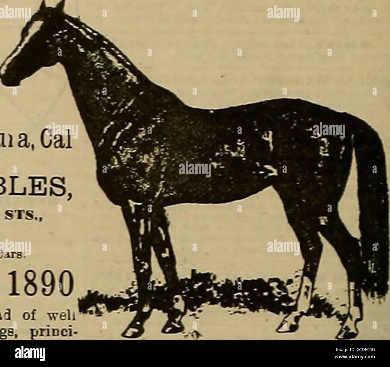 Hunters Saddlery Licol am/éricain /éthologique /à n/œuds pour Les Chevaux de Travail l/équitation /éthologique Travail /à la Longe