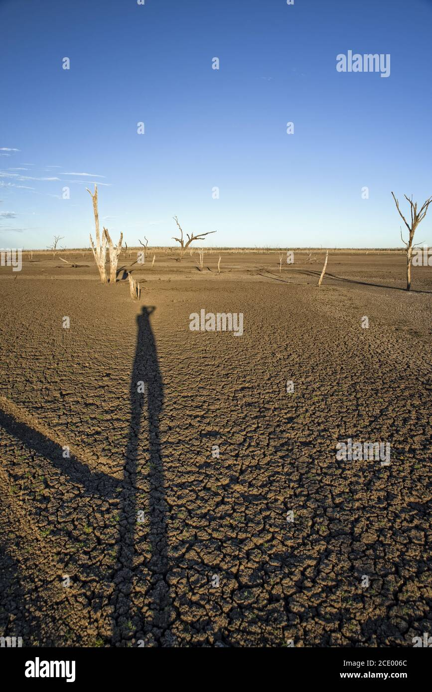 Dead trees at the wasteland of Lake Argyle at sunset with blue sky as background at the outback in Australia with long shadow of Stock Photo