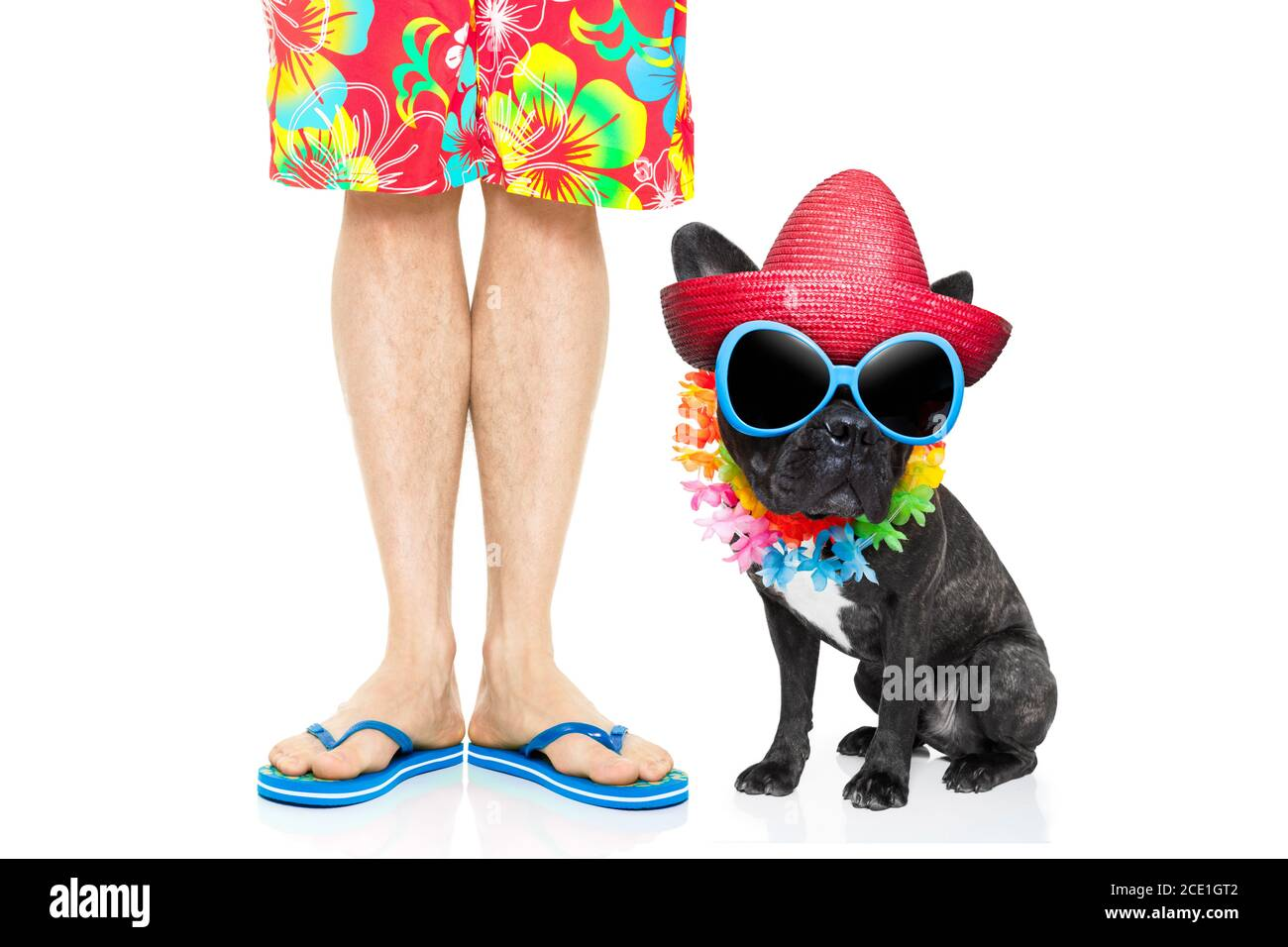 dog summer vacation Stock Photo