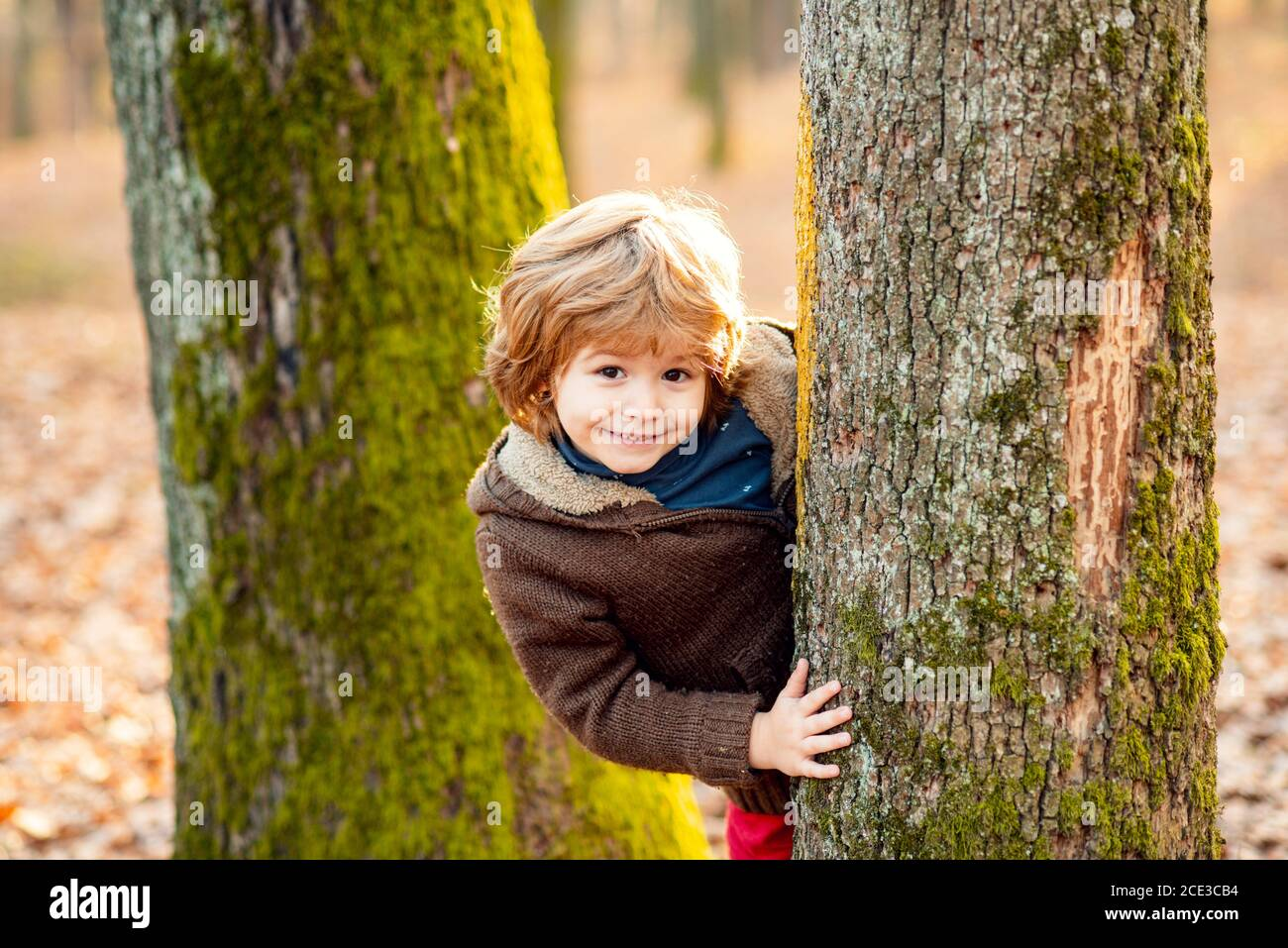 Outdoor autumn kids portrait. Cute little kid boy enjoying climbing on tree. Child in autumnal clothes learning to climb, having fun in forest or park Stock Photo