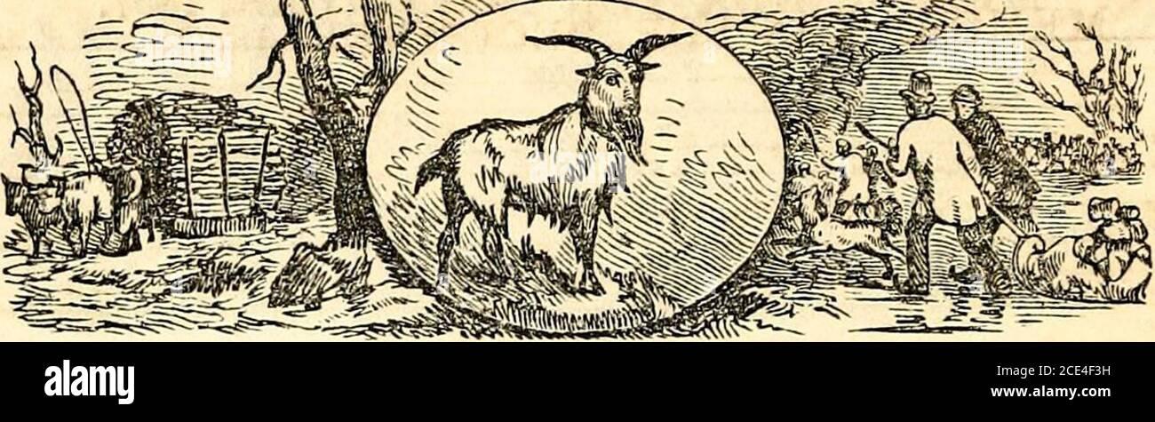 bambi boy fkk blog