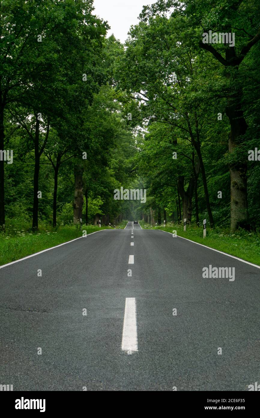 An empty blacktop two-lane road in deep lush green forest with copy space Stock Photo