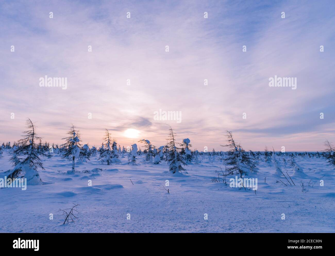 Beautiful Winter Background Wintertime Wallpaper Snow Covered Trees Close Up Outdoors With Selective Focus Nature Stock Photo Alamy Download wallpapers snow for desktop and mobile in hd, 4k and 8k resolution. alamy