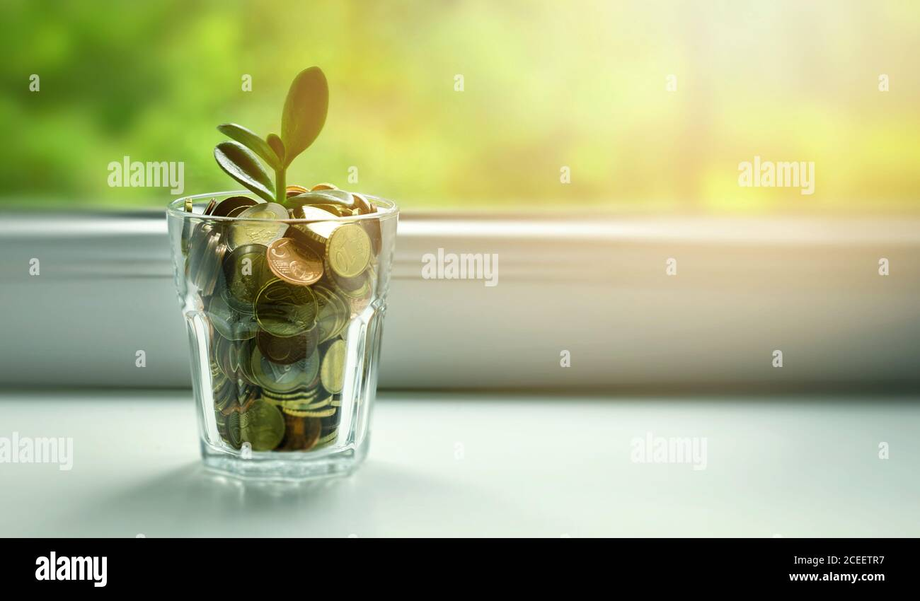 Money Tree Growing Out Of Coin Jar On Sunny Window Sill Savings Investment And Retirement Fund Concept Copy Space Stock Photo Alamy