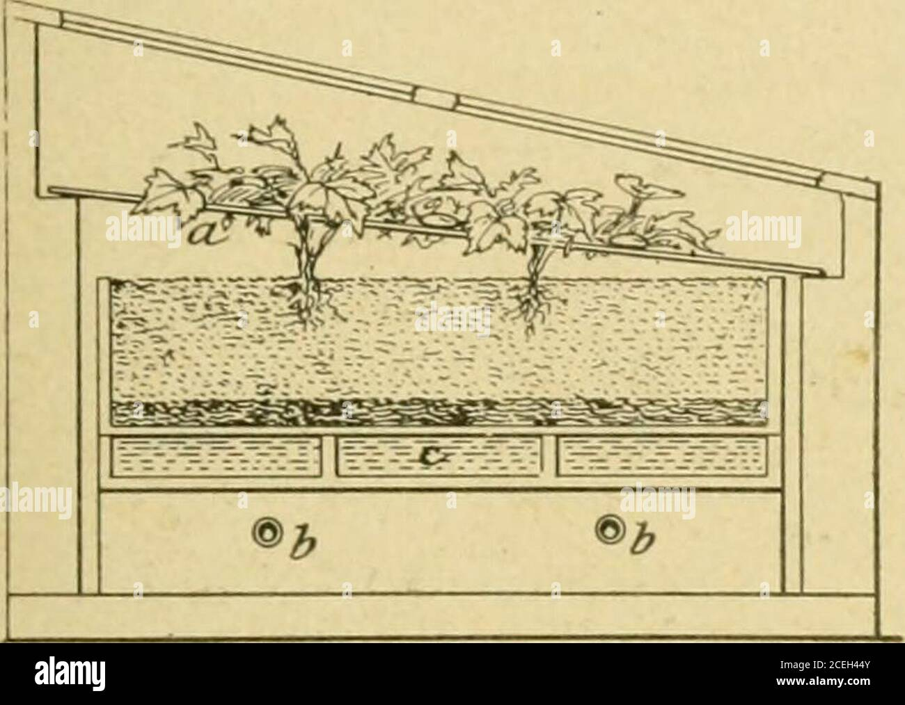 Plant Propagation Greenhouse And Nursery Practice Adaptability To Any Sized House 4 Confining Air And Heat Above The Cutting Bed Bymeans Of Glass Sash Over Hotbed Like Frames On The Uul